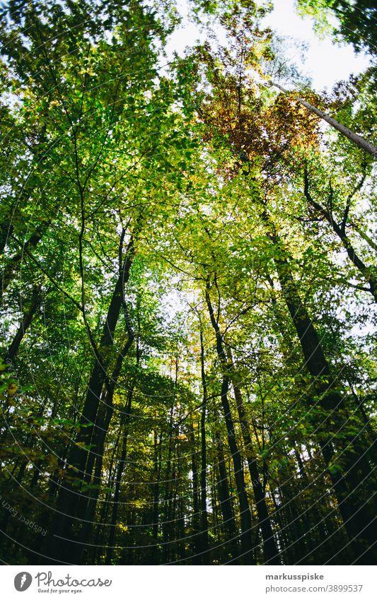Herbst-Laubwald Bayern Lebensraum Tochtergesellschaften Wolken Konifere laubabwerfend ökologisch Ökosystem Umwelt Tanne Wald Gras grün Boden Hügel Horizont
