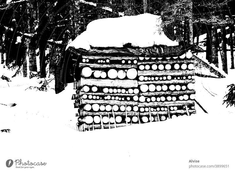 Symmetrien in den Wäldern mit Schnee ein Natur im Freien Wald Hintergrund Holzstapel Kiefer Brennholz Winter Baum Totholz natürlich hölzern Material Landschaft