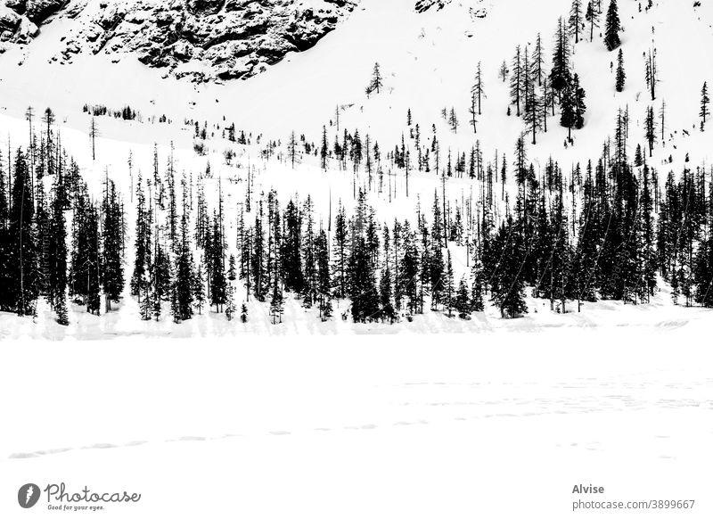 See, Kiefern und Dolomiten drei Schnee Winter Berge u. Gebirge Alpen Natur im Freien Ansicht Szene Italien alpin malerisch reisen Landschaft Panorama natürlich