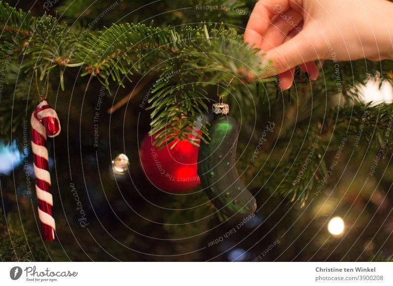 Eine Frauenhand hängt eine grüne Gurke aus Glas als Baumschmuck in den schon geschmückten Weihnachtsbaum Christbaumschmuck Glasschmuck Weihnachtsschmuck