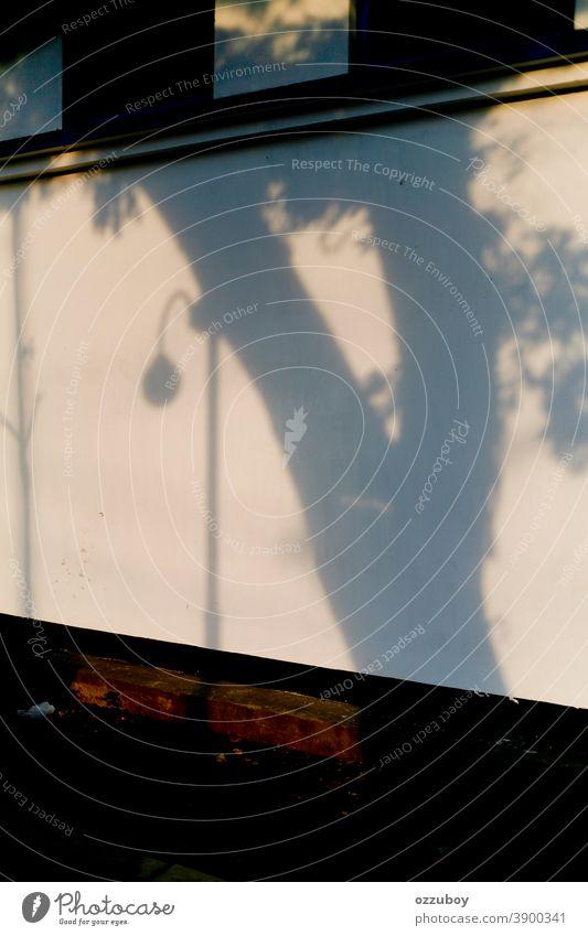 Schattenreflexion von Straßenlampe und Baum und der Wand Reflexion & Spiegelung Straßenlaterne Lampe Laternenpfahl Peitschenlaterne Straßenbeleuchtung Stadt