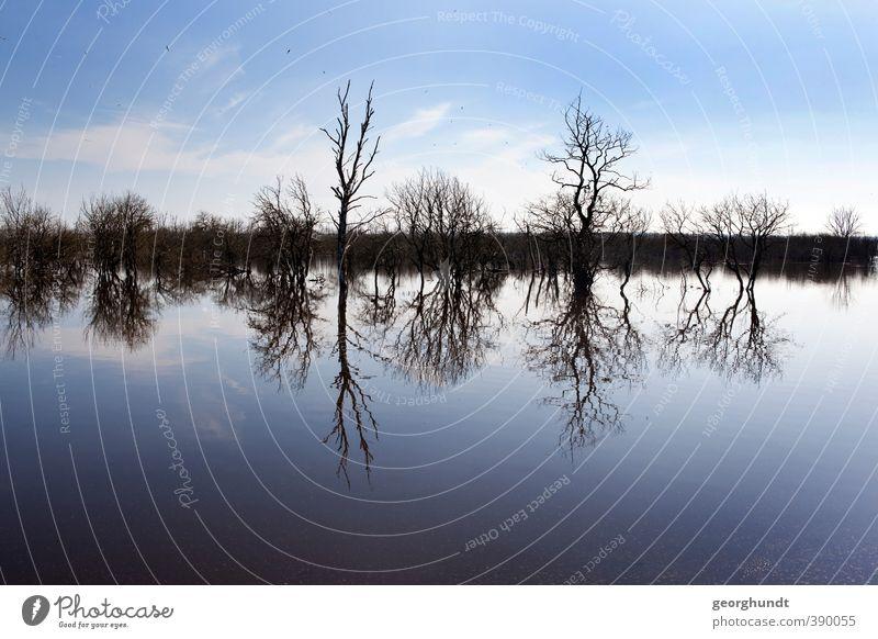Galenflut Himmel Natur Wasser Pflanze Baum Landschaft Wolken Winter Umwelt See Ausflug Hügel bizarr Mecklenburg-Vorpommern Eiszeit Moräne