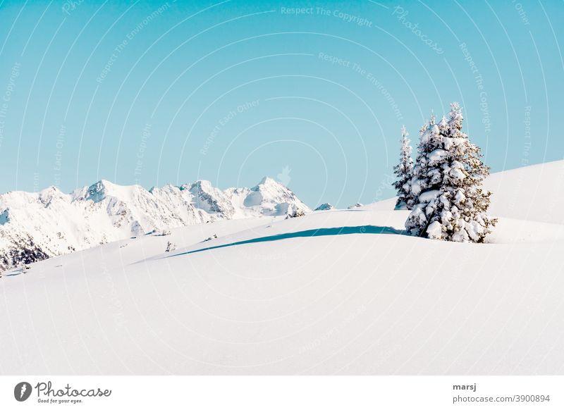 Weihnachtsstimmung auf den Bergen Winterwunderland Winterzauber Alpen unberührt Schneefeld Schneebedeckte Gipfel Blauer Himmel Schneelandschaft einzigartig