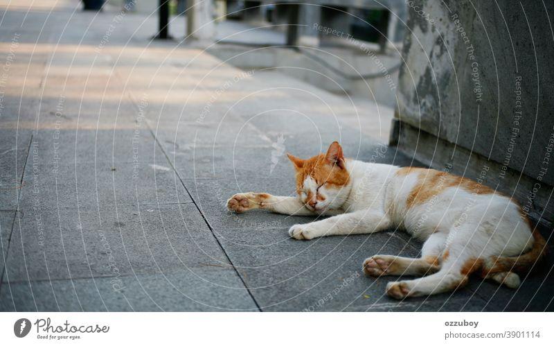 Katze schläft im Park Hauskatze Haustier Tier Säugetier Tierporträt Farbfoto schlafen Erholung liegen 1 Windstille Zufriedenheit geschlossene Augen Geborgenheit