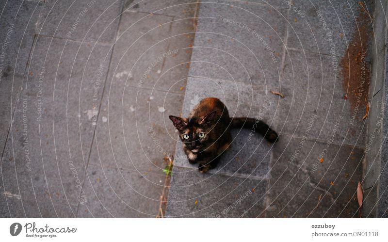 Hauskatze mit neugierigen Blicken Katze Haustier Tier Säugetier Katzenauge Tierporträt Schnurrhaar Tiergesicht Blick in die Kamera Neugier Wachsamkeit Farbfoto