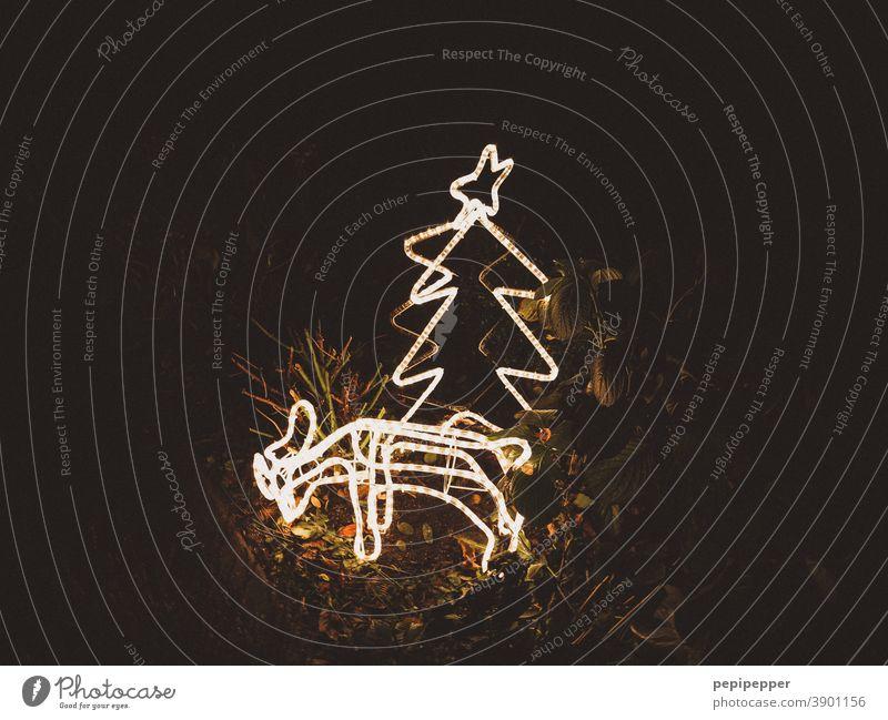 leuchtendes Rehkitz hinter leuchtenden Weihnachtsbaum 2 Tannenzweig Stern (Symbol) Weihnachtsstern Weihnachten & Advent Weihnachtsdekoration