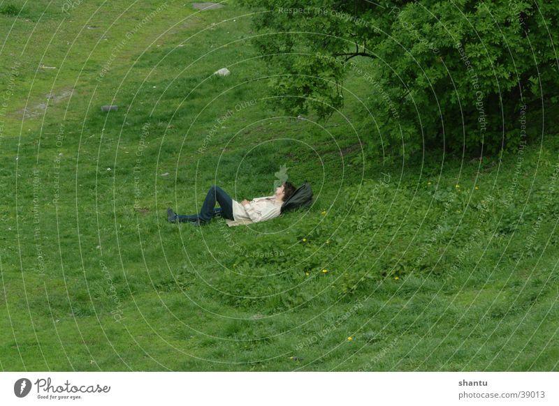 Relax Wiese Gras ruhig Sommer Rasen Schatten
