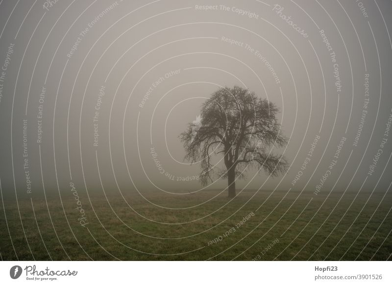 Baum im  Nebel Berge Natur Außenaufnahme Farbfoto Menschenleer Landschaft Umwelt Pflanze Tag Gedeckte Farben Tanne dunkel schlechtes Wetter Kontrast Licht