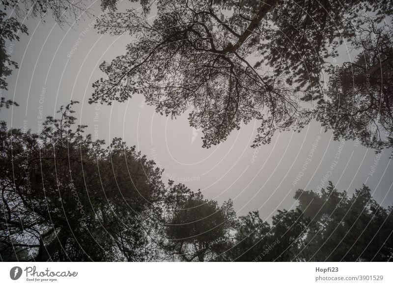 Baumwipfel im Nebel Berge Natur Außenaufnahme Farbfoto Menschenleer Landschaft Umwelt Pflanze Tag Gedeckte Farben Tanne dunkel schlechtes Wetter Kontrast Licht