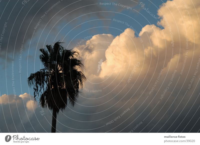 Kurz vor dem Sturm Wolken Wind Unwetter Mallorca Palma de Mallorca