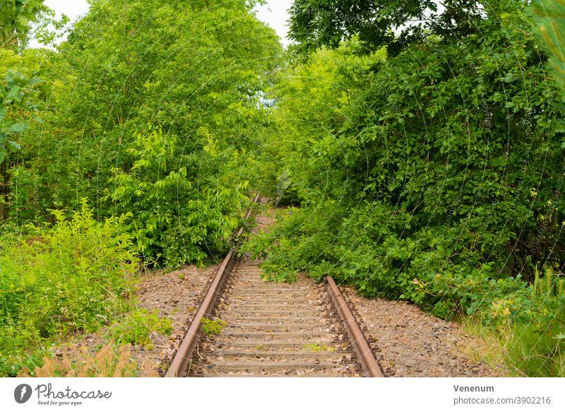 Alte Eisenbahnstrecke in Deutschland Bahn Gleisbett Schienen Eisenbahnschwellen Wald Wälder Baum Bäume