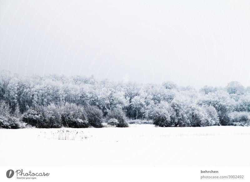 winterwonderland Schneedecke idyllisch verträumt schön Schneelandschaft Winterspaziergang Wintertag Winterstimmung Winterwald geheimnisvoll Märchenhaft