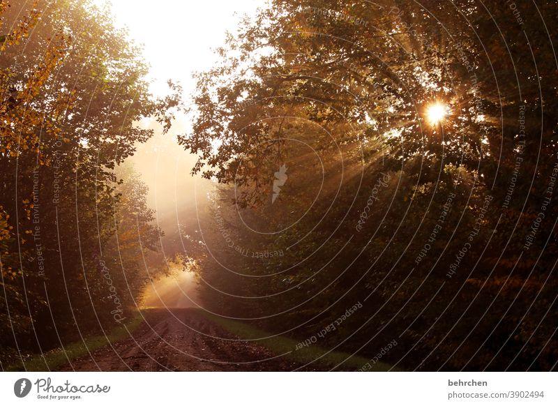 wenn der tag erwacht Hoffnung Gegenlicht Sonnenstern Sonnenaufgang Landschaft Idylle Sonnenstrahlen Herbstwald herbstspaziergang Herbstfärbung herbstlich