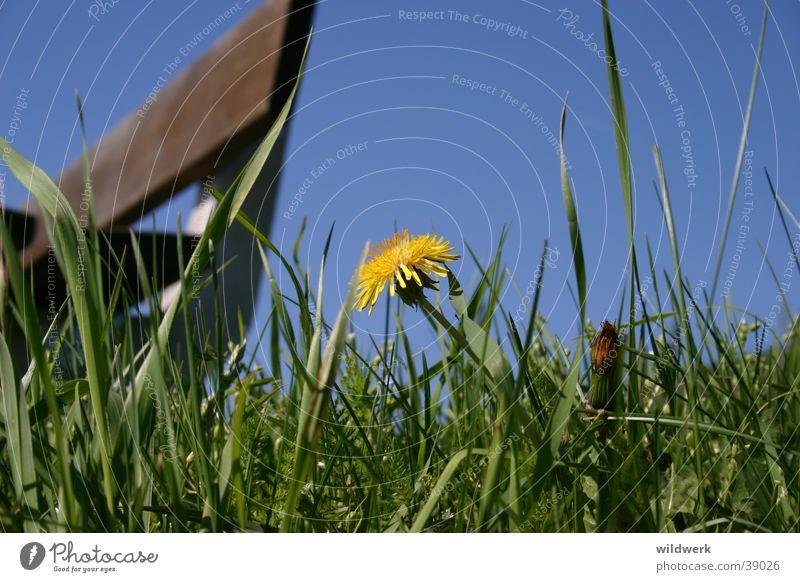 Der Frühling ist da Himmel blau gelb Wiese Blüte Frühling Deutschland Bank Löwenzahn