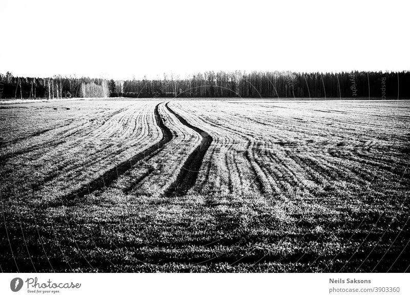 Traktorspuren auf landwirtschaftlichem Feld Ackerbau Müsli Mais Land Landschaft Ohr Bauernhof Landwirtschaft Lebensmittel Korn Wachstum Ernte natürlich Natur