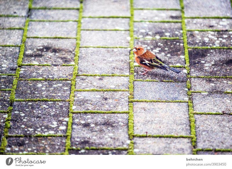 futter?! Tiergesicht Flügel niedlich Natur außergewöhnlich exotisch fantastisch Federn Wildtier Vogel schön klein Fink Schnabel Licht Tag Menschenleer