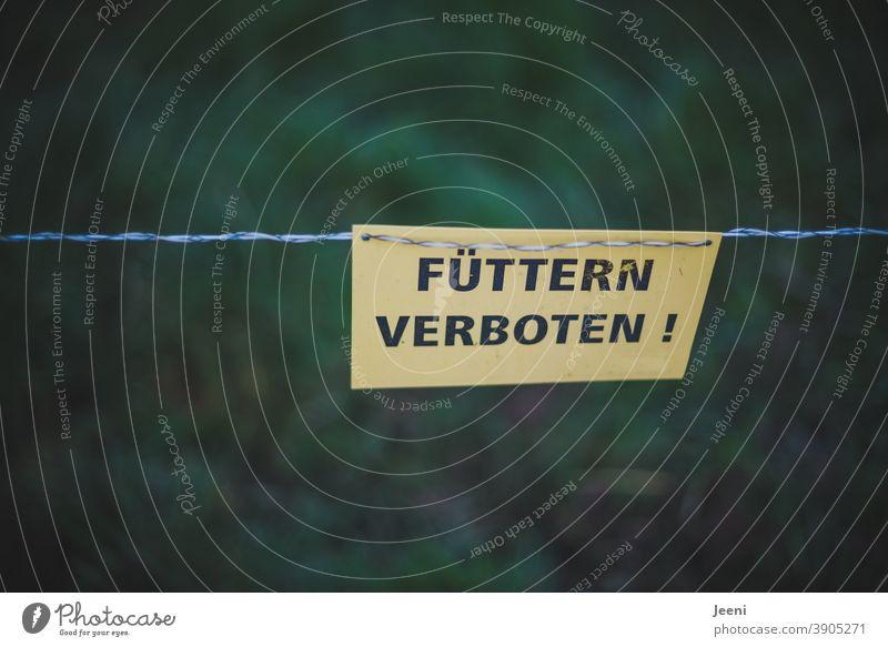 Füttern Verboten | so ist es geschrieben auf einem gelben Warnschild an der Koppel für Tiere | das Verboten-Schild ist befestigt an einem Stromdraht