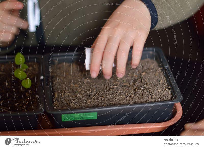 Gemüseaussaat – Kind sät Samen für Gemüse in Blumenerde Saat säen Aussaat aussäen Hand Beet Erde Kürbis Samentütchen gärtnern Gärtner Gemüsegarten selbst