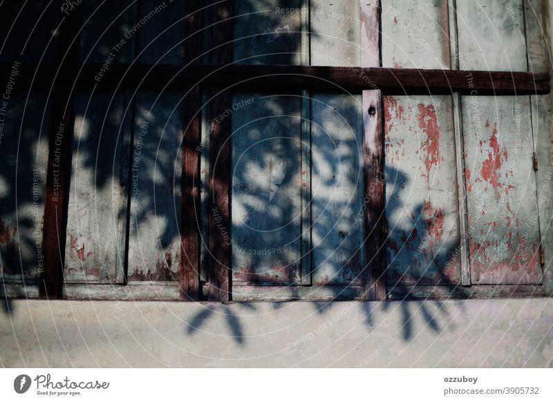 Schatten eines Laubbaums auf einem Oldtimer-Fenster Blatt Pflanze altehrwürdig Vintage-Fenster Vintage-Stil Design retro Natur Hintergrund Nahaufnahme