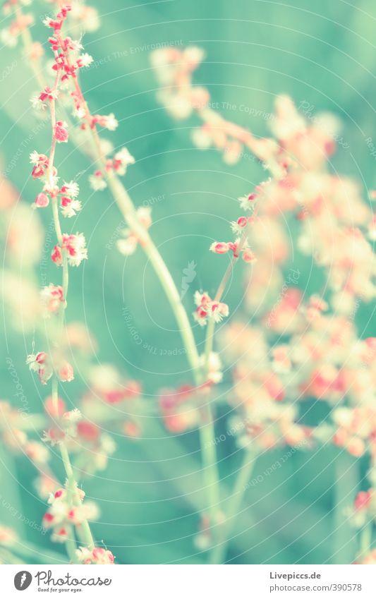 Sommerwiese Umwelt Natur Pflanze Sonnenlicht Blume Blatt Blüte Wiese Blühend Duft leuchten ästhetisch dünn frisch schön natürlich grün rosa Farbfoto