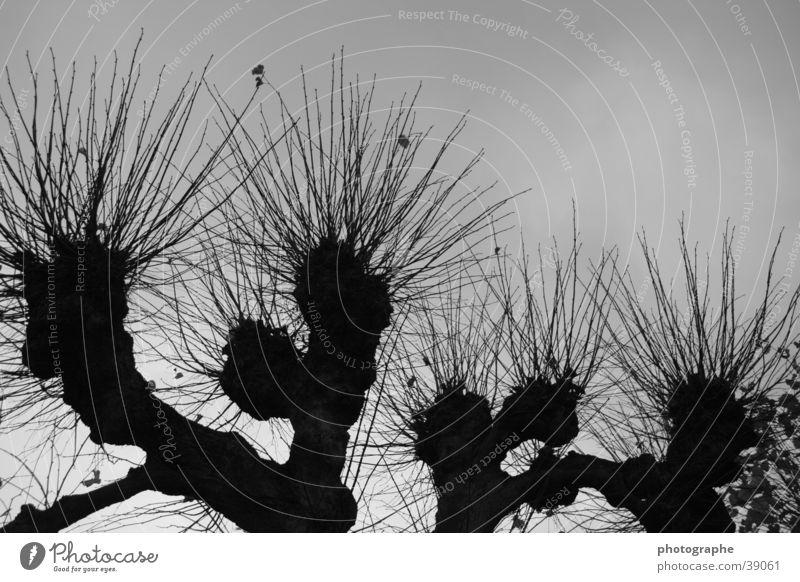 Kontraste Baum schwarz dunkel grau Ast Baumkrone