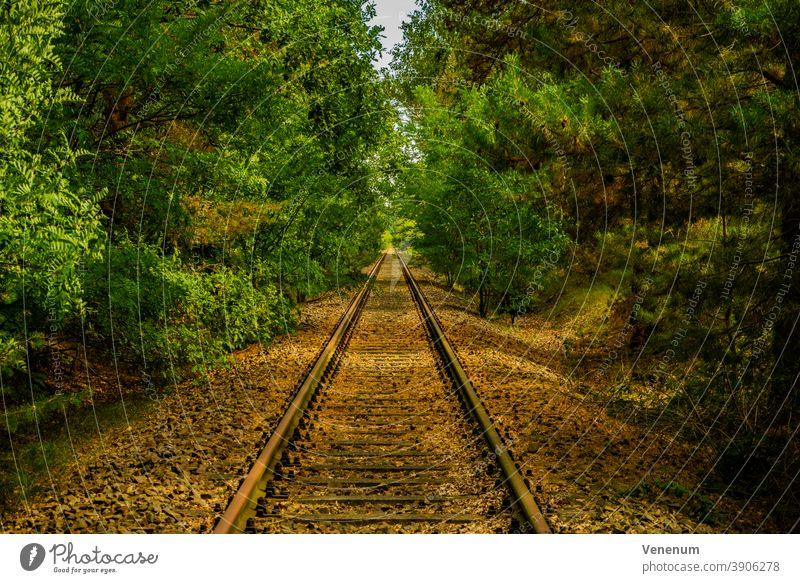 alte ungenutzte Bahngleise in der Nähe von Luckenwalde Gleisbett Schienen Eisenbahn bügeln Rust Eisenbahnschwellen Wald Wälder Baum Bäume schwarz und weiß
