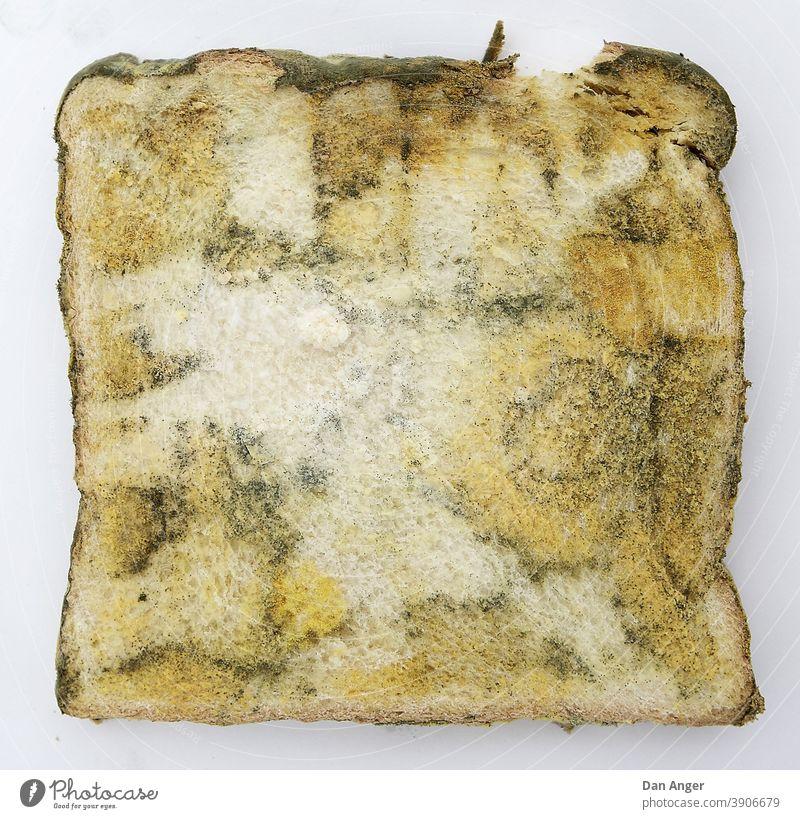 Verschimmeltes Toastbrot Schimmel toast toastbrot verschimmelt Lebensmittel verdorben