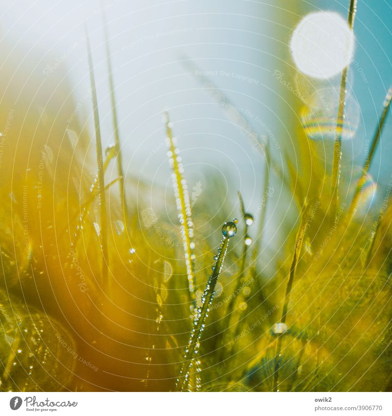 Benetzt Wiese Gras nass Wassertropfen Detailaufnahme geheimnisvoll Natur grün Makroaufnahme Farbfoto Menschenleer Außenaufnahme Nahaufnahme klein Wachstum hell