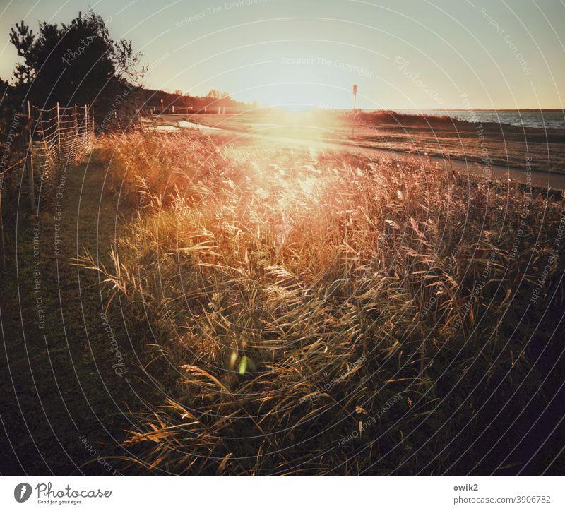 Stille Küste Gegenlicht Sonnenlicht Sonnenungergang Ostsee Außenaufnahme Farbfoto Strand Himmel Natur Landschaft Menschenleer Wasser Sonnenstrahlen Meer