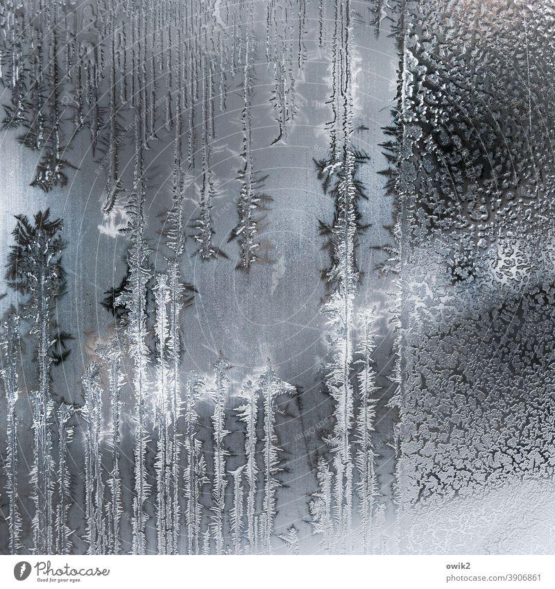 Eisfläche Glasscheibe Frost authentisch Winter Eiskristall Strukturen & Formen Nahaufnahme Tag kalt Innenaufnahme bizarr Menschenleer Muster frieren Farbfoto