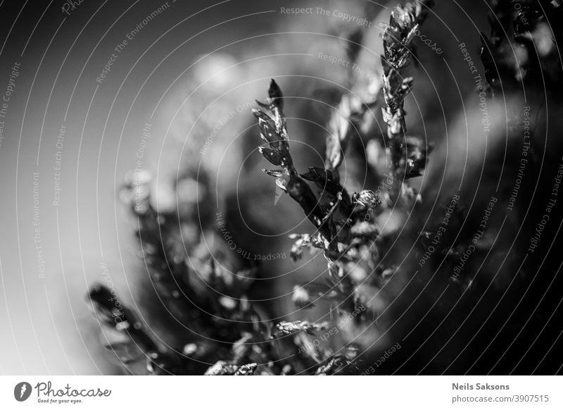 Nahaufnahme eines Mooses abstrakt Natur grün Pflanze Außenaufnahme Makroaufnahme Schwache Tiefenschärfe Wald Gras Detailaufnahme Herbst klein Windstille Umwelt