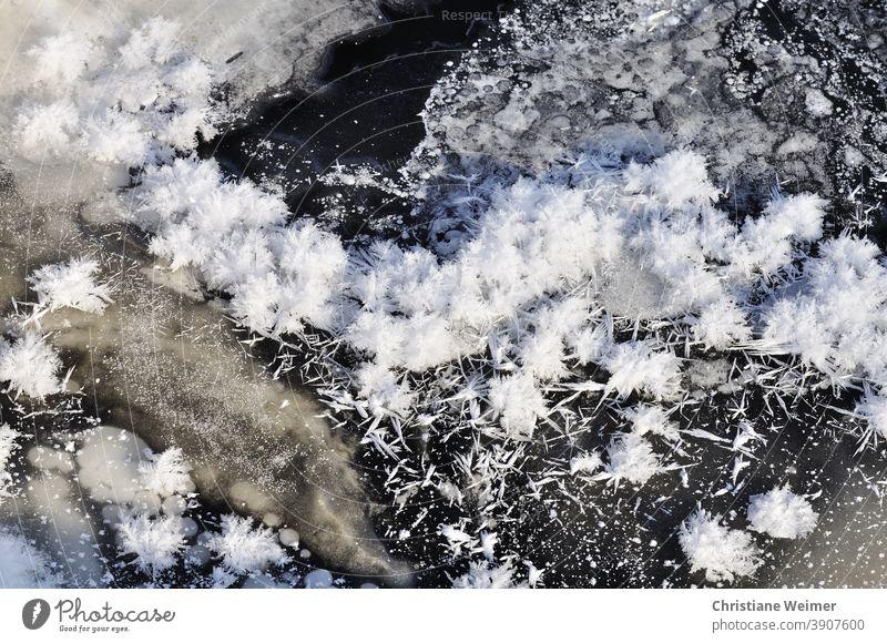 Eis- und Schneekristalle Eiskristalle Winter Jahreszeiten Frost Kälte Eisfläche kalt gefroren Außenaufnahme Natur frieren Menschenleer Raureif weiß Nahaufnahme