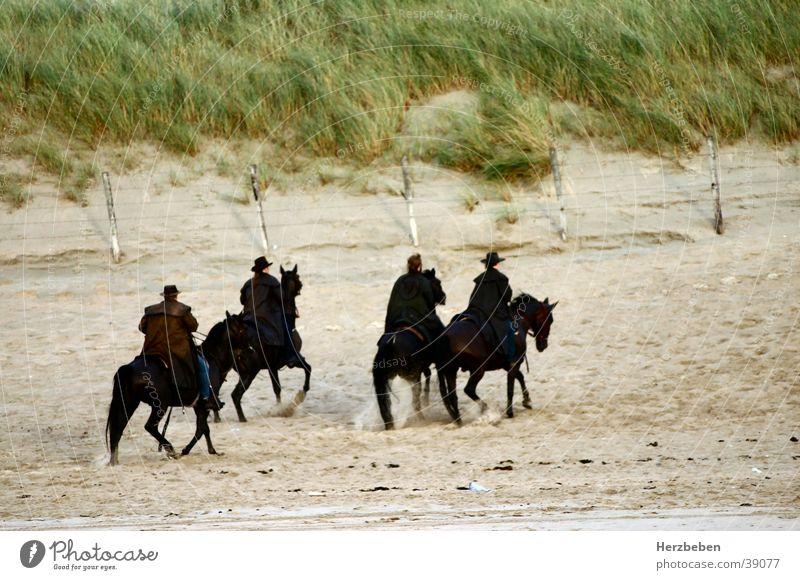 Die Strandreiter Natur schwarz Menschengruppe Sand Pferd Stranddüne Reiter