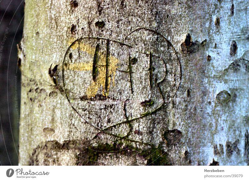Damals Baum Baumrinde Kitsch Herz Liebe Natur