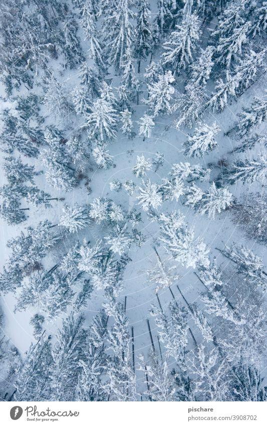 Winterwald Wald Bäume Schnee Landschaft Vogelperspektive Luftaufnahme Natur kalt Menschenleer Farbfoto Baum Umwelt Gedeckte Farben Wetter ruhig Frost