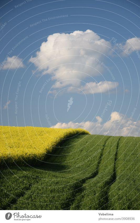Rapsfeld im Odenwald raps rapsfeld felser acker landwirtschaft landschaft kulturlandschaft wolke wolkwn hessen deutschland europa ackerfurche ackerfurchen