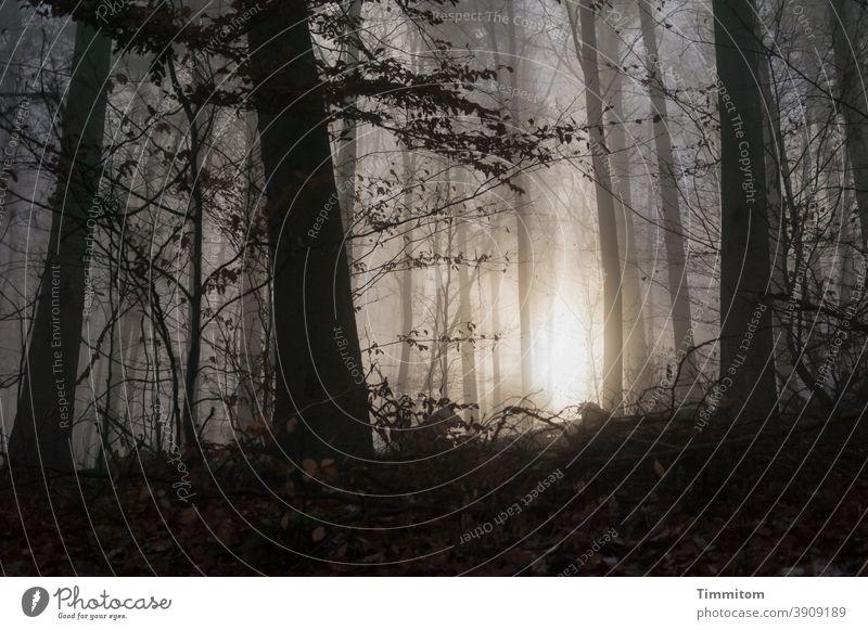 Nebelwald - die Sonne zeigt sich Wald Sonnenlicht Baum Herbst Winter kalt dunkel hell Umwelt Nebelschleier leuchten Menschenleer Stimmung