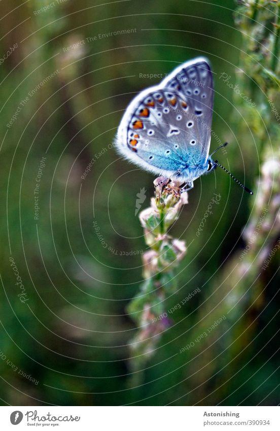 Falter Natur blau grün schön Pflanze Blume Tier Umwelt dunkel Wiese Gras oben Beine Wetter sitzen Wildtier