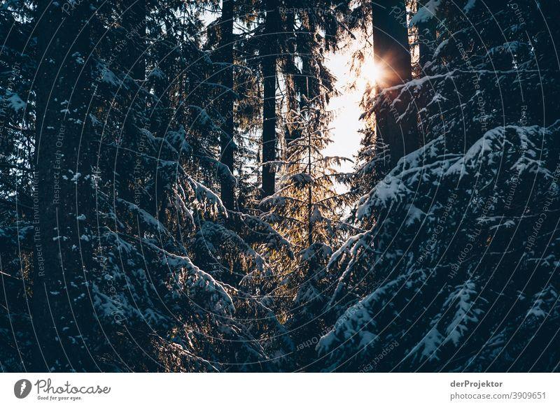 Schneebedeckte Nadelbäume mit Sonne im Harz II Joerg Farys Nationalpark Naturschutz Niedersachsen Winter harz naturerlebnis naturschutzgebiet naturwunder