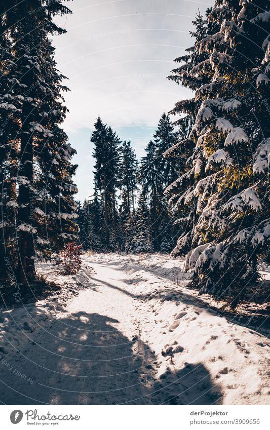 Schneebedeckte Nadelbäume mit Sonne im Harz III Joerg Farys Nationalpark Naturschutz Niedersachsen Winter harz naturerlebnis naturschutzgebiet naturwunder