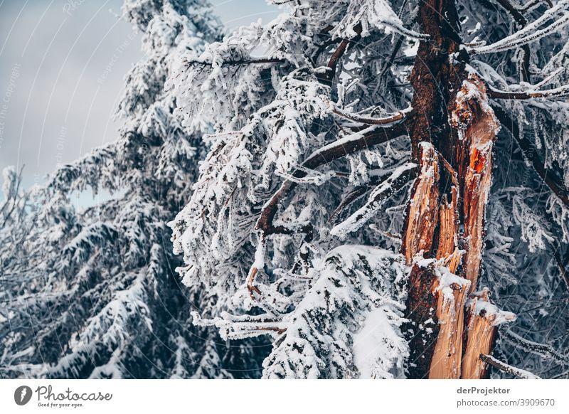 Schneebedeckte Nadelbäume im Harz Joerg Farys Nationalpark Naturschutz Niedersachsen Winter harz naturerlebnis naturschutzgebiet naturwunder sachsen-anhalt