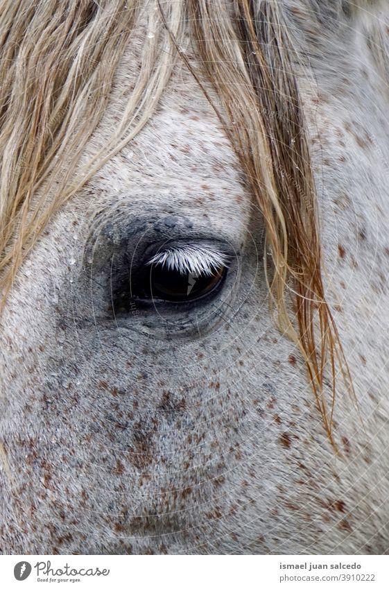 Schimmelauge Pferd weiß Porträt Tier wild Kopf Behaarung Natur niedlich Schönheit elegant wildes Leben Tierwelt ländlich Wiese Bauernhof Weidenutzung im Freien