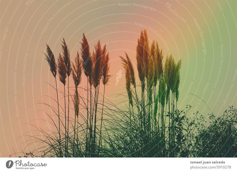 weiße Blütenpflanzen und Rhabarber Pflanzen Blume Himmel Sonnenuntergang Sonnenlicht hell Silhouette Farben farbenfroh Garten geblümt Natur romantisch Schönheit