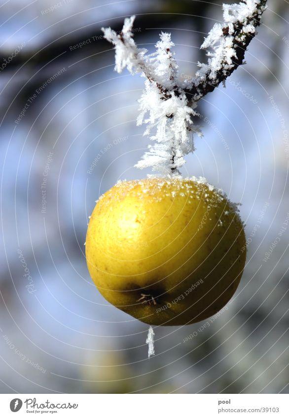Der letzte Apfel Natur Baum grün Winter kalt Schnee Wiese Frucht Frost gefroren Kristallstrukturen Raureif Eiskristall Apfelbaum Streuobstwiese