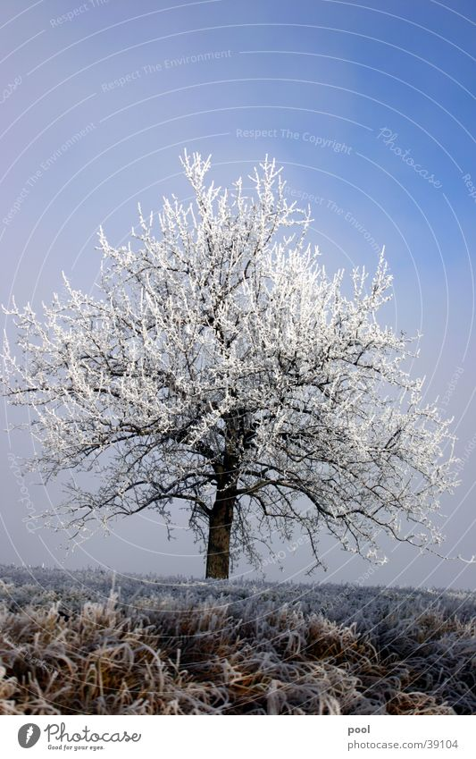 Baum im Raureif Himmel weiß Baum blau Winter kalt Schnee Landschaft Eis Frost Niveau Raureif