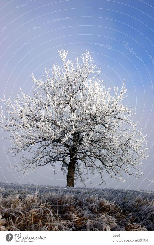 Baum im Raureif Winter kalt Licht weiß Schnee blau Himmel Frost Eis Landschaft Niveau
