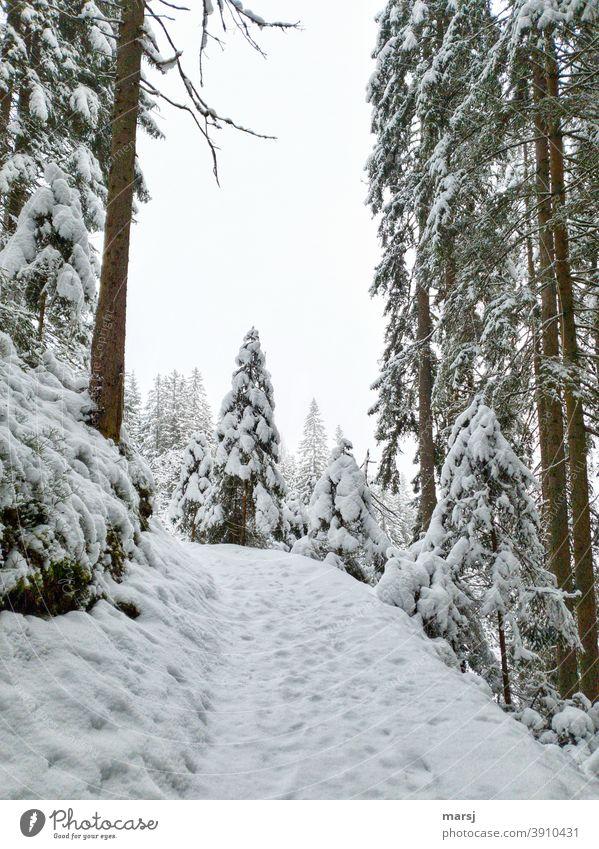 Frisch verschneiter Wald, Adventszauber Wintertag Winterzauber winterlich Schnee Fichtenwald Wanderwege Spazierweg Landschaft Frost Winterwald Winterurlaub