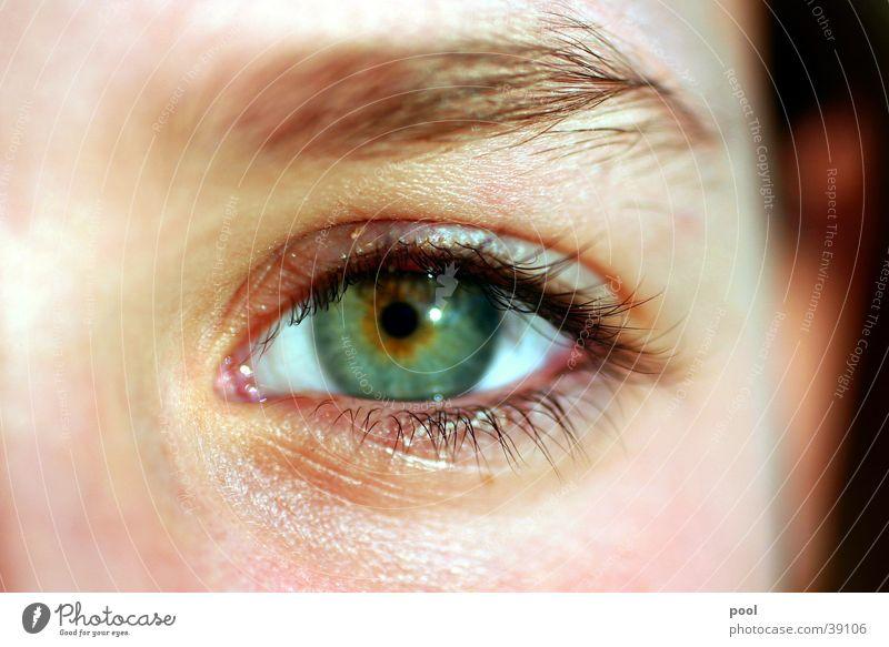 Kim Pupille Wimpern grün Augenbraue Schminke Frau Nahaufnahme Blick Regenbogenhaut Gesichtsausdruck Mensch Augenlicht Detailaufnahme