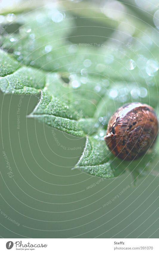 junge Schnecke Natur Pflanze Tier Sommer Blatt Wildpflanze Wald Lebewesen Schneckenhaus 1 Tierjunges rund braun grün Lichtstimmung Waldstimmung Umwelt hellgrün