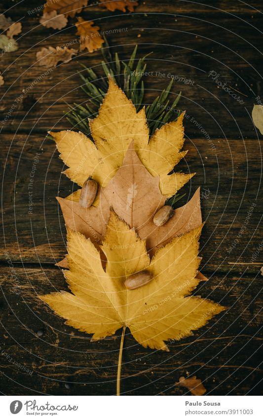 Herbstlaub authentisch herbstlich Herbstfärbung fallen Herbstwald Blätter Tag Blatt Farbfoto Herbstwetter Herbstbeginn Natur Außenaufnahme mehrfarbig Bitd Wald